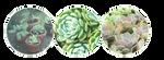 f2u | succulents by tiqerteethresource