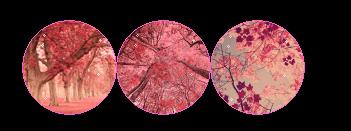 f2u | cherry blossoms by tiqerteethresource