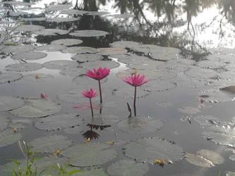Three Lilies by Skyelher