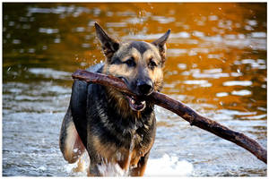 Bringing the stick by ciseaux