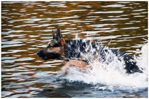 Fetch! by ciseaux