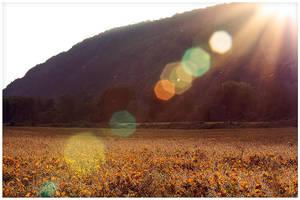 Soy fields by ciseaux