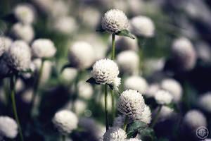 silver orb flower by ciseaux