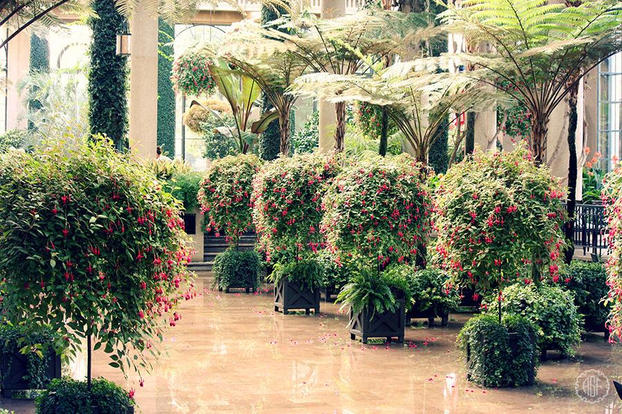orangerie 2 by ciseaux