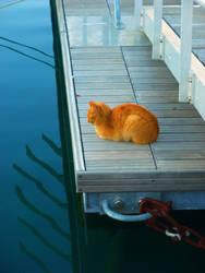 Golden cat by monikabuz