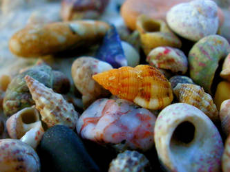 Sea treasure by monikabuz