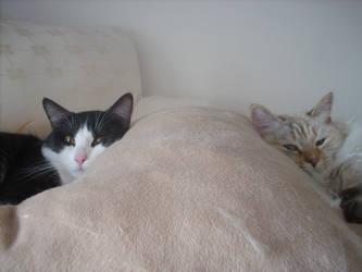 Lazy Cats by ashleon