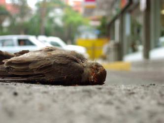 Dead Bird 1 by ashleon