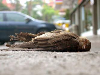 Dead Bird 2 by ashleon