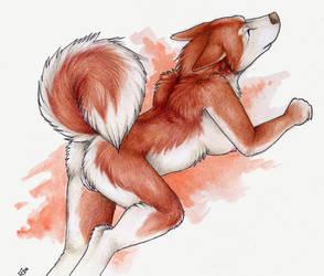 Husky Butt by Korrok