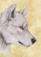 Wolf Portrait by Korrok
