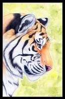 Tiger Portrait by Korrok