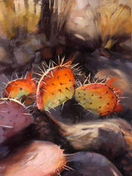 A sunbathing cactus by LS-1302