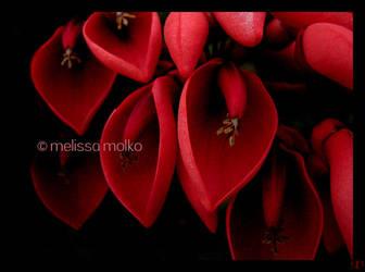 Hearts by MelissaMolko