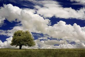 field of tranquility by Konczey-Zsolt