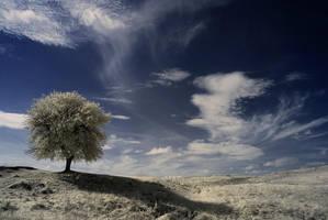 whispering wind - infrared by Konczey-Zsolt