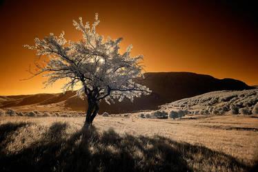 infrared sunrise by Konczey-Zsolt