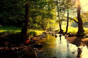forest creek by Konczey-Zsolt