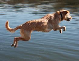 flying dog by objekt-stock