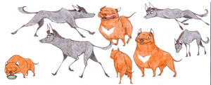 Mexican Hairless and Pitbull concepts by Dead-Raccoons