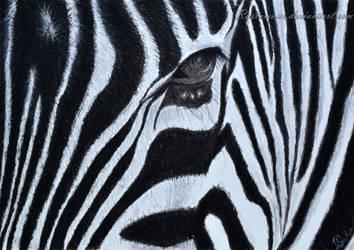 Zebra texture by Rustamova