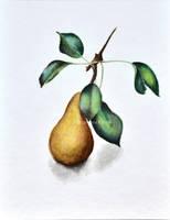 Pear by Rustamova