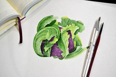 Watercolor Cauliflower by Rustamova