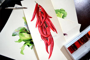 Chilli peppers in watercolor by Rustamova
