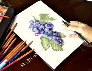 Grapes in pencil by Rustamova