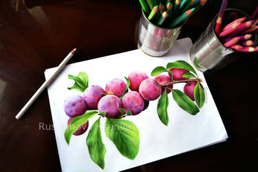 Plums in pencil by Rustamova