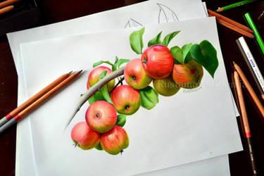 Apples in pencil by Rustamova