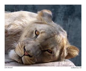 Lion Around by faidoi