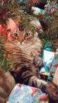 Christmas Cat by Mistystar7