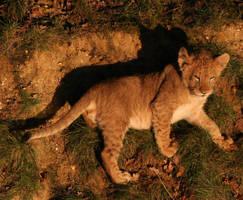 lion cub 2 by dark-angel-11309