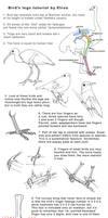 Bird legs tutorial by Elruu