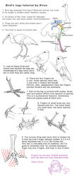Bird legs tutorial by Elruu