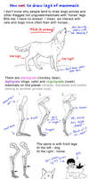 How to draw legs of mammals by Elruu