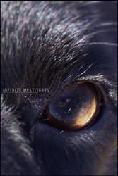 Infinite Multiverse by Kojima2087