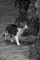 Alley cat by BlueShadowM