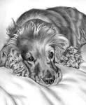 Dog by Regius