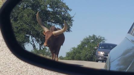 Texas Longhorn by WisTex