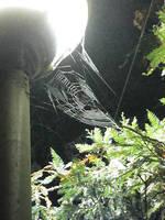 Misty Webs IV by MBryn