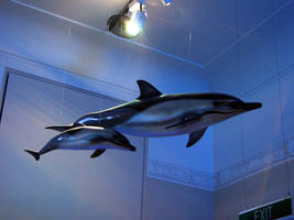 Dolphin by two-ladies-stocks