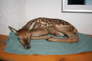 deer calf I by two-ladies-stocks