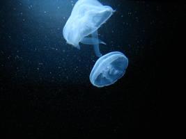 Underwater II by two-ladies-stocks