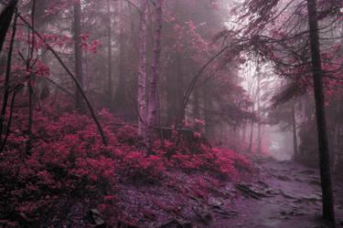 [stock] Mystic woods by DominikaAniola