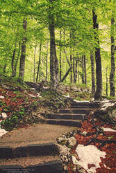 Path In The Woods by DominikaAniola