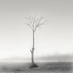barren by andreupardales