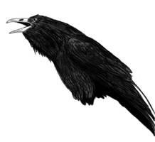 Crow Study by HeiYuBai