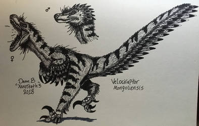 Velociraptor 3.0 by XenoTeeth3